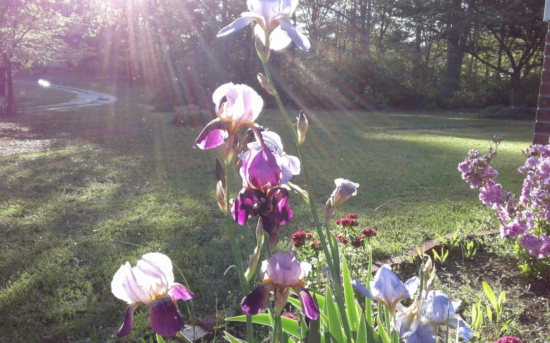 Iris and More Iris
